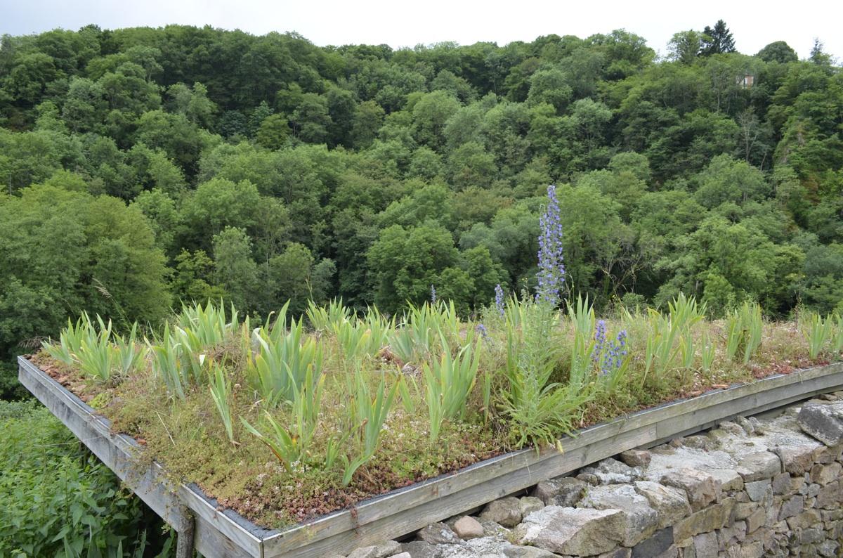 Refaire Un Toit D Abri De Jardin tout pour réussir un toit végétalisé rudimentaire